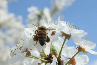 Вопрос-ответ: как выбрать качественный мед?