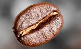 Какие бывают типы кофейных зерен?